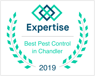 Best Pest Control Companies in Chandler