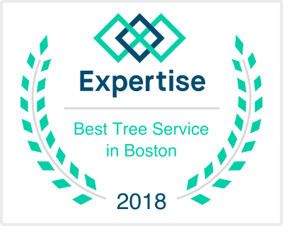 Tree Service Professionals