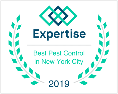 Best Pest Control Companies in New York City