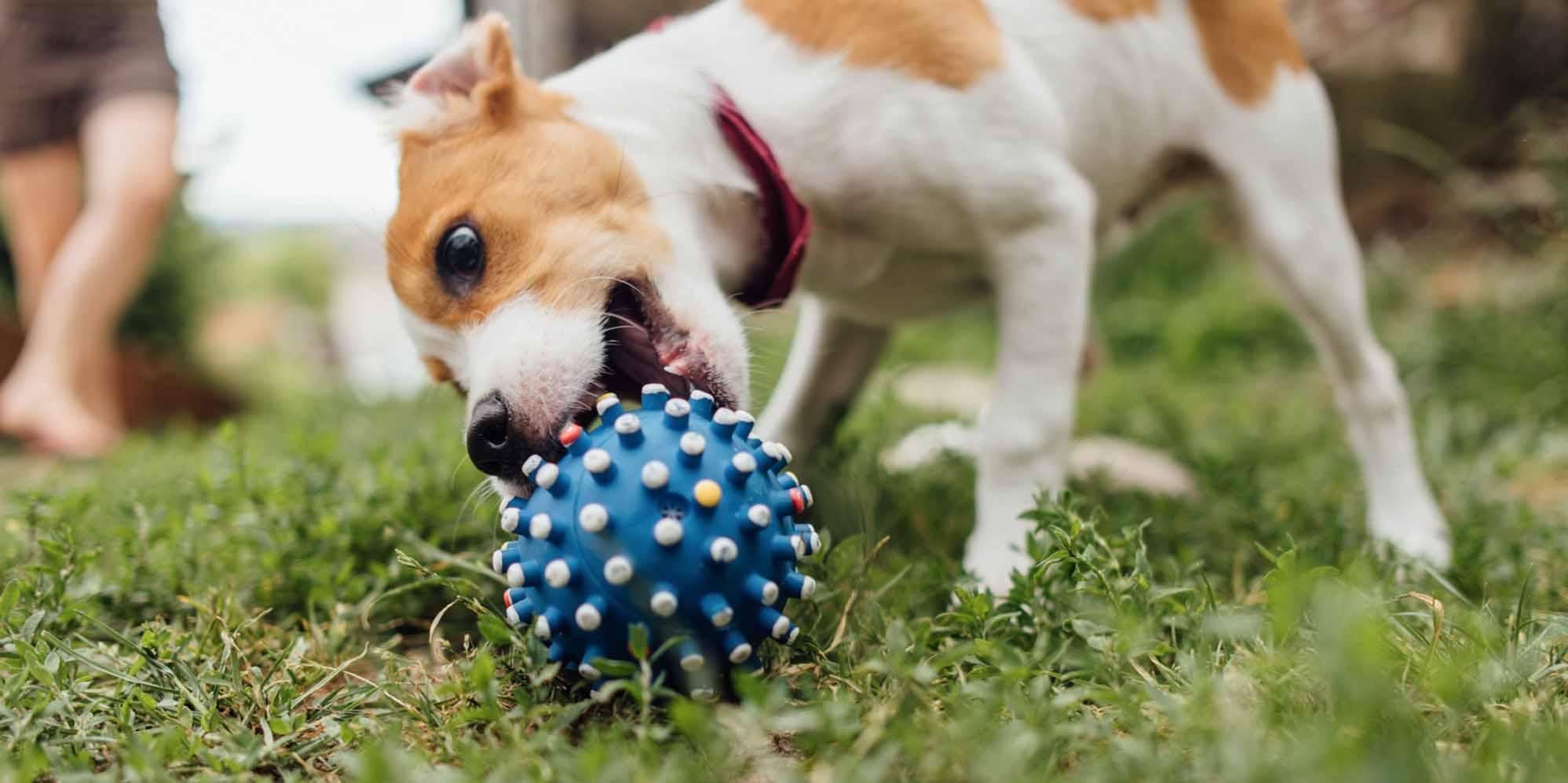 21 Best Austin Dog Boarders Expertise