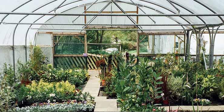 9 Best Dallas Garden And Nursery Stores Expertise