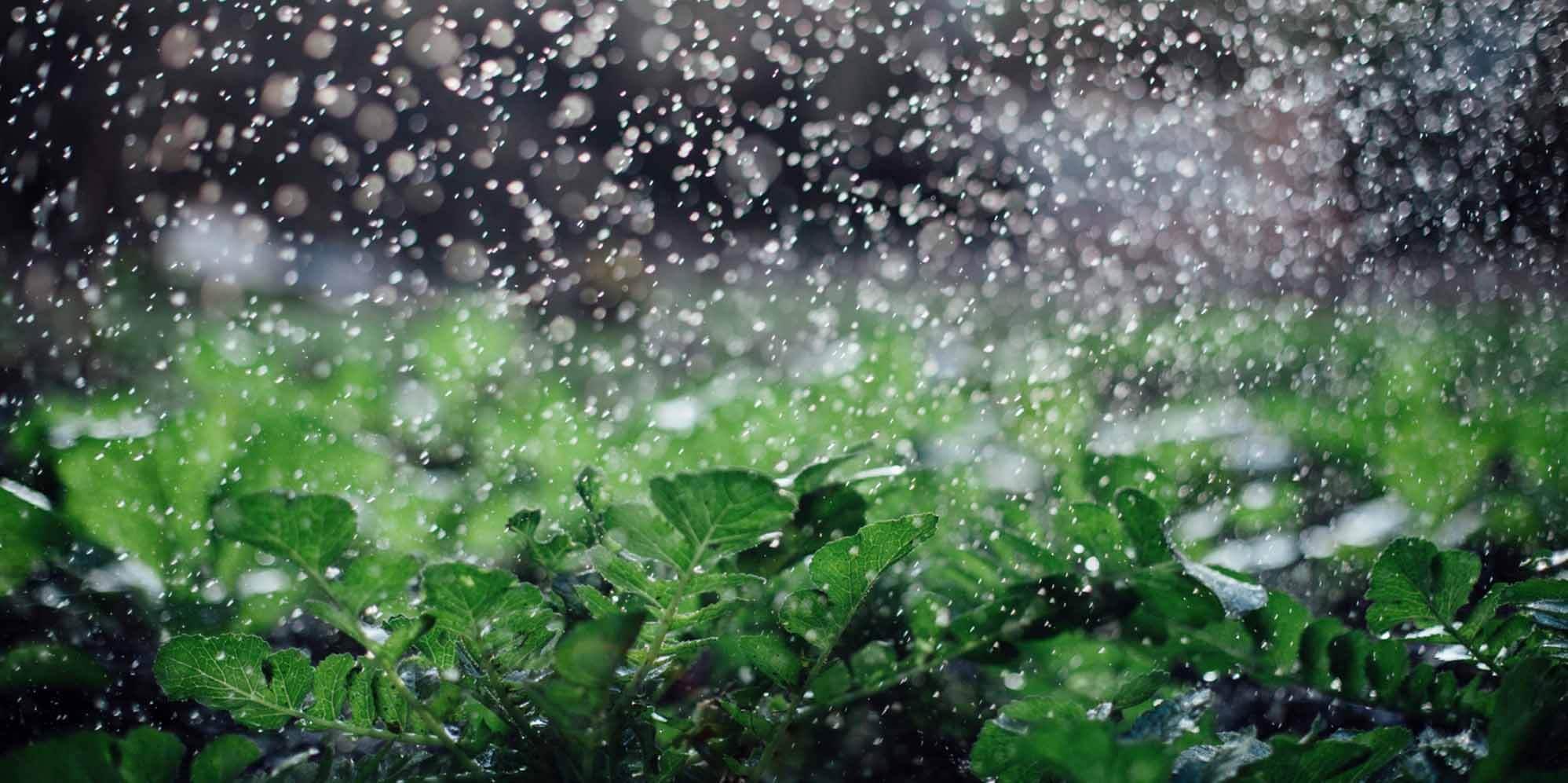 16 Best Nashville Sprinkler Irrigation Companies Expertise