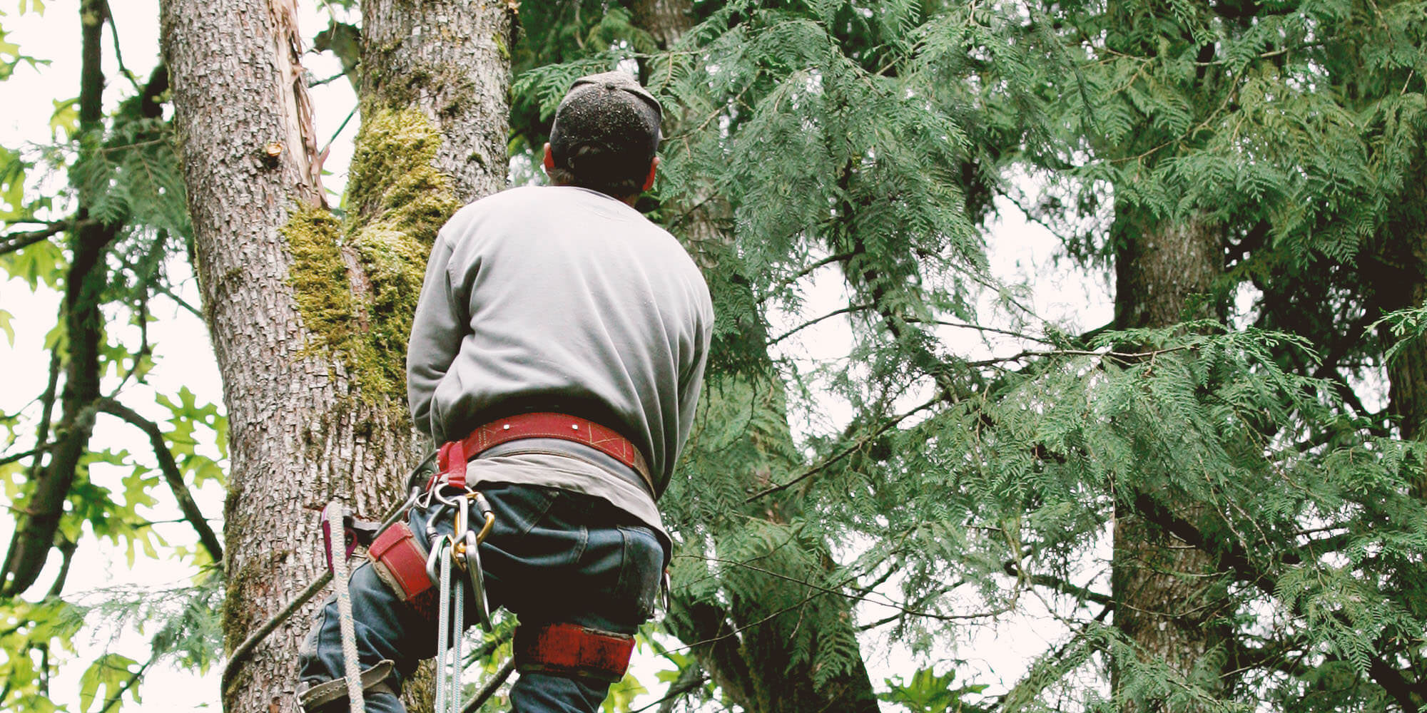 18 Best Virginia Beach Tree Service Professionals | Expertise
