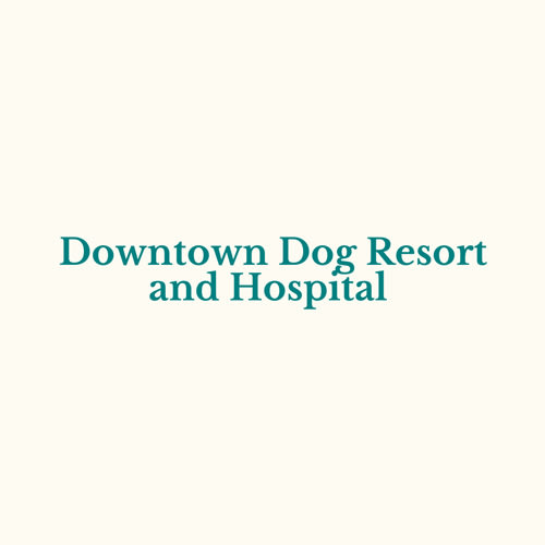 Downtown Dog Resort Gray Biji Us