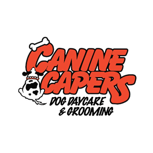 17 best buffalo dog groomers expertise canine capers solutioingenieria Image collections