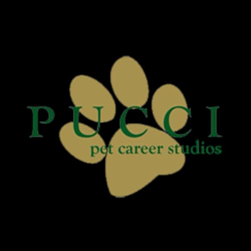 19 best minneapolis dog groomers expertise pucci pet career studios solutioingenieria Image collections