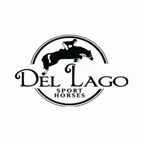 17 Best Orlando Horse Boarders Expertise