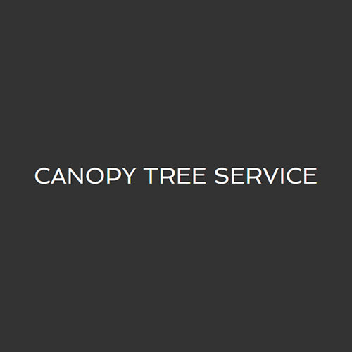 Canopy Tree Service  sc 1 st  Expertise & 20 Best San Antonio Tree Service Professionals | Expertise