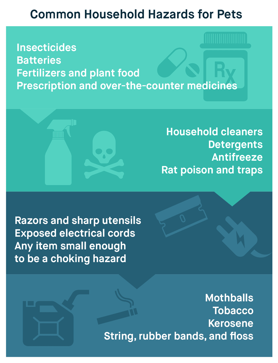 Common Household Hazards